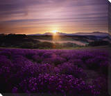 Lavendar Sunset Canvas Gallery Wrapped Canvas