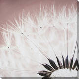 Delicate Dandelion Canvas with Glitter Stretched Canvas Print