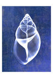 Achatina Shell (indigo) Prints by Bert Myers