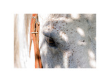 Horse's Eye Giclée-tryk af Tom Artin