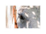 Horse's Eye Lámina giclée por Tom Artin