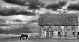 Horse and Barn Prints by Trent Foltz