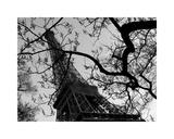 Eiffel III Giclee Print by Tom Artin