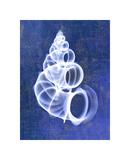 Wentletrap Shell (indigo) Giclee Print by Bert Myers