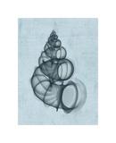 Wentletrap Shell (light blue) Giclee Print by Bert Myers