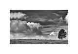 Sheep on the Horizon Giclee Print by Trent Foltz