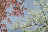 Skogskornell Konst av Donna Geissler