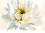 Painted Petals I Prints by Christine Elizabeth