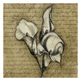 Cala Lily Script 1 Prints by Kristin Emery