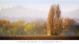 Vineyard Mist Prints by Lance Kuehne