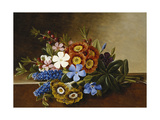 Periwinkle, Auricula and Grape Hyacinths on a Marble Ledge Giclee Print by Johan Laurentz Jensen