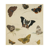 Studies of Butterflies and Insects Giclee Print by Sydenham Teast Edwards