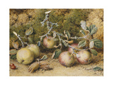 Still Life with Apples, Hazelnuts and Rosehips Giclee Print by William Hough