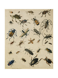 Studies of Insects Giclee Print by Sydenham Teast Edwards