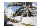 A Garden in Nassau Giclee Print by Winslow Homer