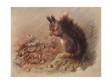 Sciurus Vulgaris: the Common Squirrel Giclee Print by Archibald Thorburn