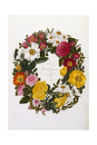 Frontispiece of Roses Giclee Print by Mary Lawrence