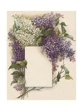 Victorian Illustration of Lilac Border Giclee Print