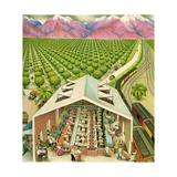 Illustration of California Orange Grove Giclee Print by C.H. Dewitt