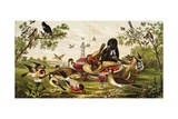Color Print of Birds Feasting on a Fruit Pie Reproduction procédé giclée