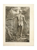 Engraving Depicting the Muscle Groups of the Back Giclee Print