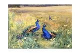 Peacocks in a Field Reproduction procédé giclée par Mildred Anne Butler