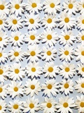 1950s-1960s Overall Daisy Flower Pattern on Pale Blue Background Photographic Print