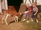 1950s-1960s Children Boy and Girl Feeding Calf Bottle Milk Outside Barn Photographic Print