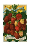 Seed Catalog Illustration with Strawberries Lámina giclée