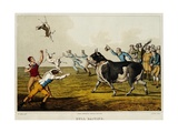 19th Century British Illustration of Bull Baiting Giclee Print