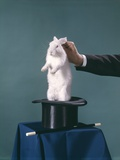 White Rabbit Being Pulled Out of Silk Top Hat by Hand of Magician Photographic Print
