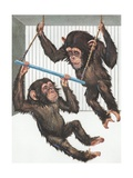 Illustration of Two Chimps Playing Giclee Print
