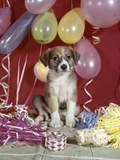 1960s Puppy Dog Balloons Party and Colorful Streamers Photographic Print