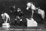 Napoleon of the Chimpanzee World Photographic Print