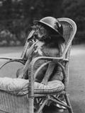 Dog Wearing Air Raid Prevention Warden's Helmet Photographic Print