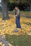 1970s-1980s Teenage Boy Raking Autumn Leaves Photographic Print