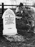 A Pet Cemetery Photographic Print