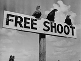 "Grouse on ""Free Shoot"" Sign Photographie"