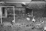 Dogs Playing Soccer Photographic Print
