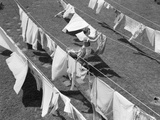 1950s Woman Hanging Laundry Outdoors on Several Clotheslines Photographic Print