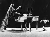 A Musical Praying Mantis Photographic Print