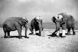 Elephants Play Beach Cricket Photographic Print