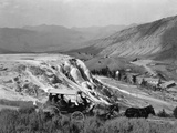 Stagecoach at Mammoth Hot Springs Photographic Print