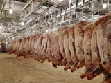 1970s Sides of Raw Beef Hanging in Refrigerated Room of Meat Packing Plant Photographic Print