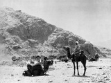 Camels Carry Water to Troops in Sudan Fotografisk tryk