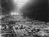 Ivory Sale in Warehouse Photographic Print