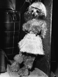 Grass-Skirted Poodle Photographic Print