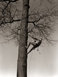 1940s Man Worker Tree Surgeon Climbing Elm Tree Trunk with Trim Saw Pruning Trimming Branches Limbs Photographic Print