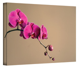 Magenta Orchid Gallery-Wrapped Canvas Gallery Wrapped Canvas by Elena Ray