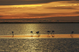 Flamingo's at Sunset Photographic Print by Art Wolfe